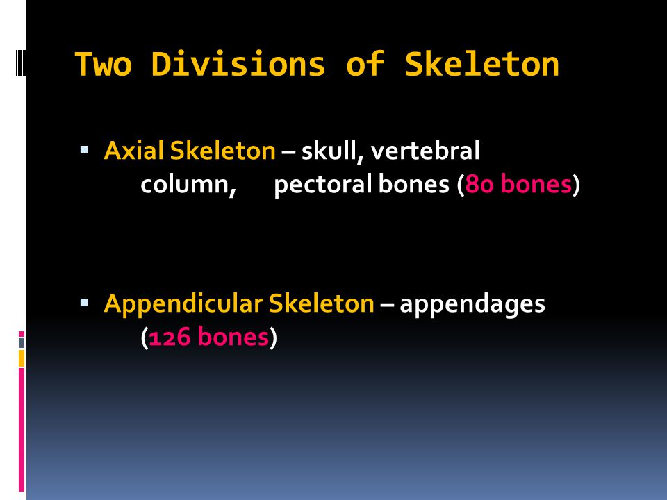 Two Divisions of Skeleton
