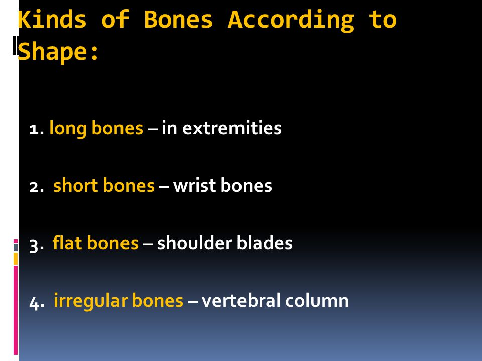 Kinds of Bones According to Shape:
