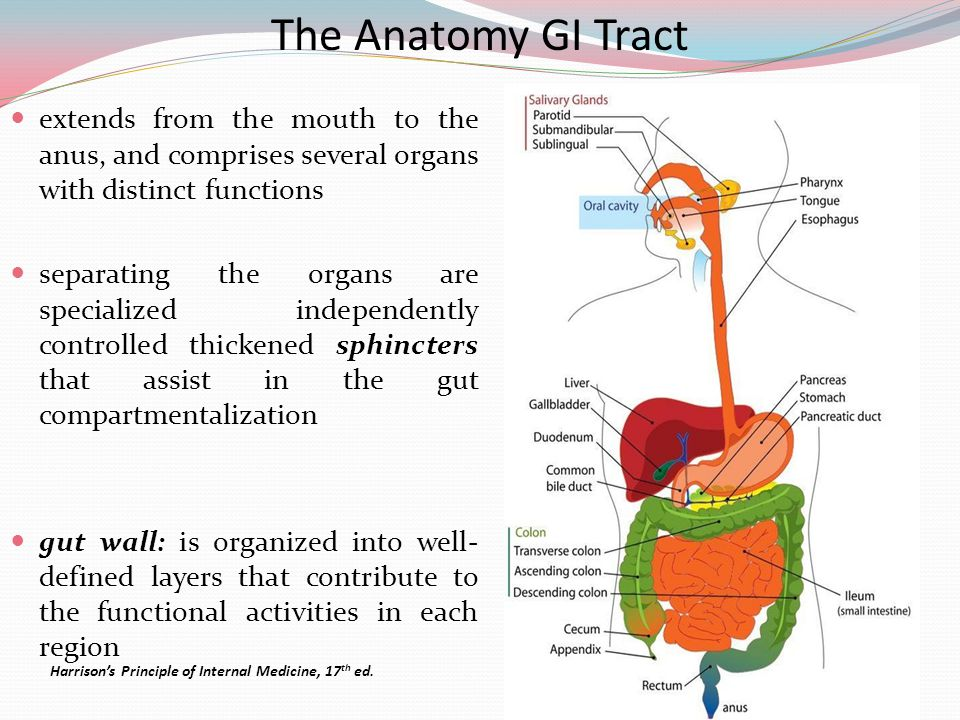 The Anatomy GI Tract extends from the mouth to the anus, and comprises several organs with distinct functions.