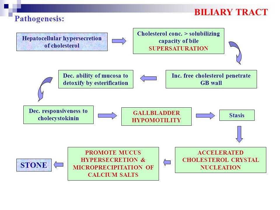 BILIARY TRACT Pathogenesis: STONE