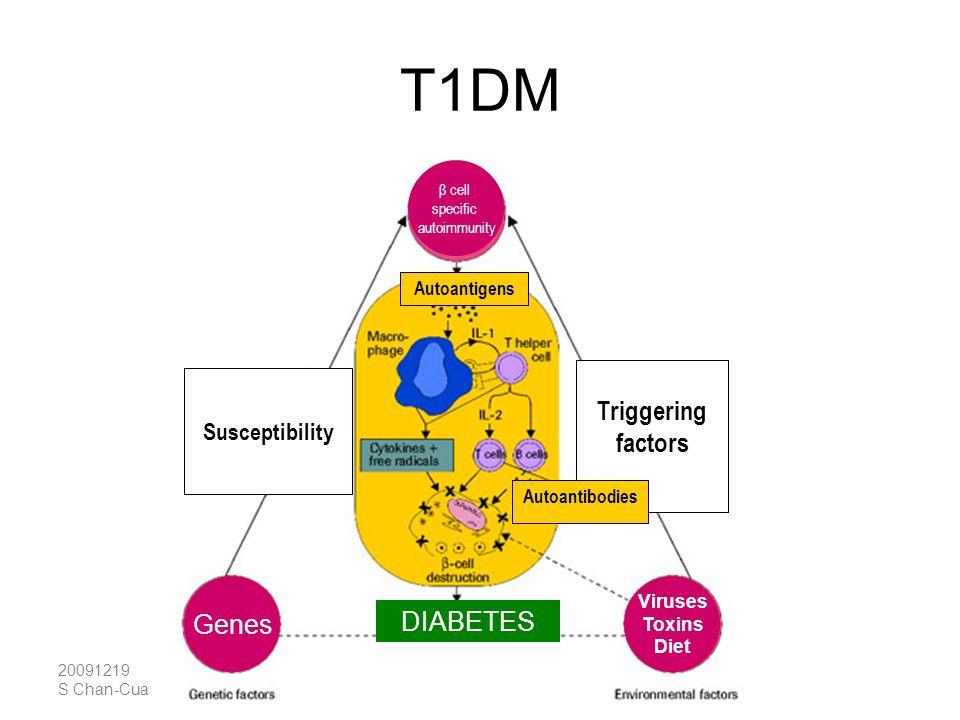 T1DM Triggering factors Genes DIABETES Susceptibility Autoantigens