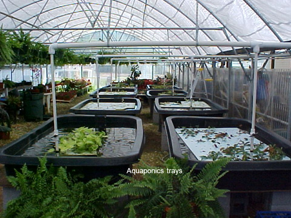 Aquaponics trays