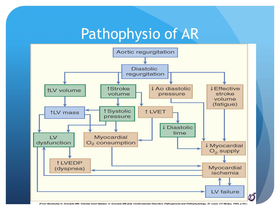 Pathophysio of AR