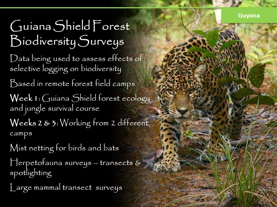 Guiana Shield Forest Biodiversity Surveys