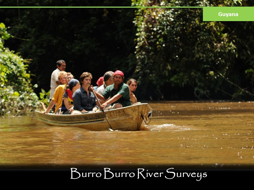 Burro Burro River Surveys