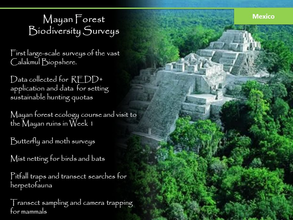 Mayan Forest Biodiversity Surveys