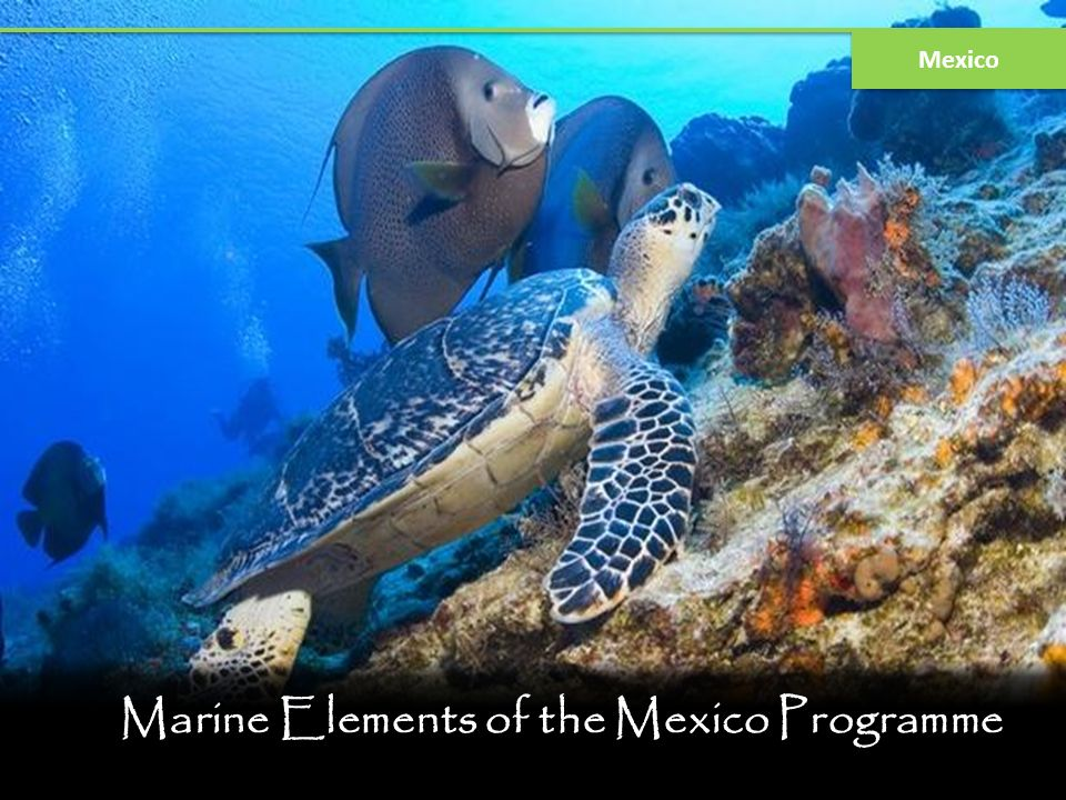 Marine Elements of the Mexico Programme
