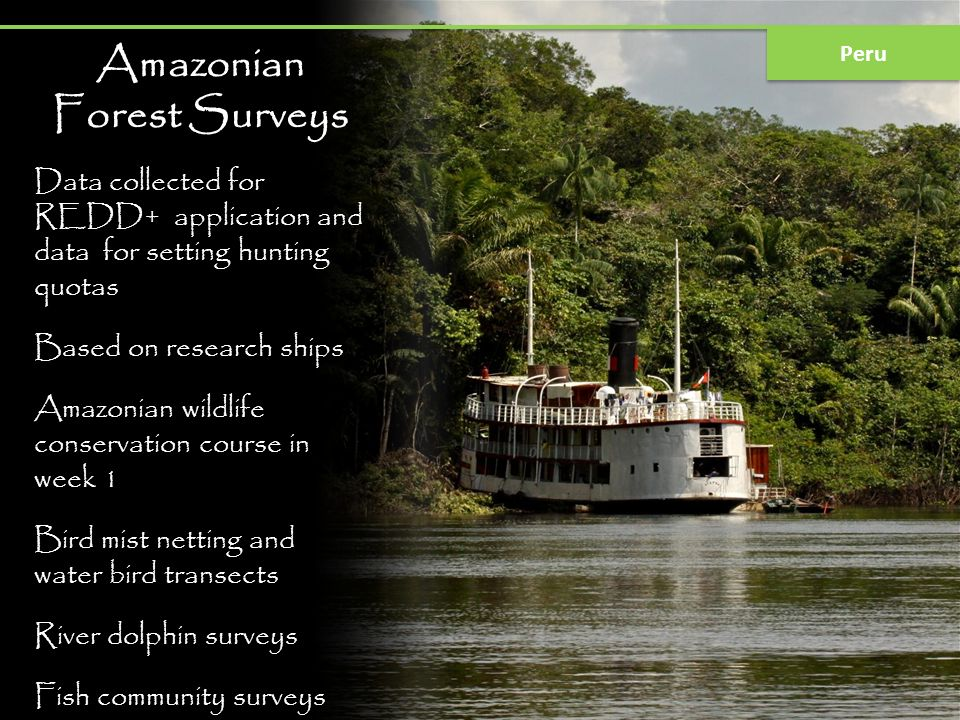 Amazonian Forest Surveys