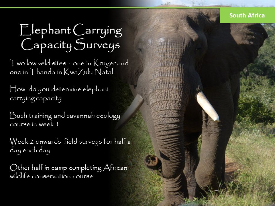 Elephant Carrying Capacity Surveys