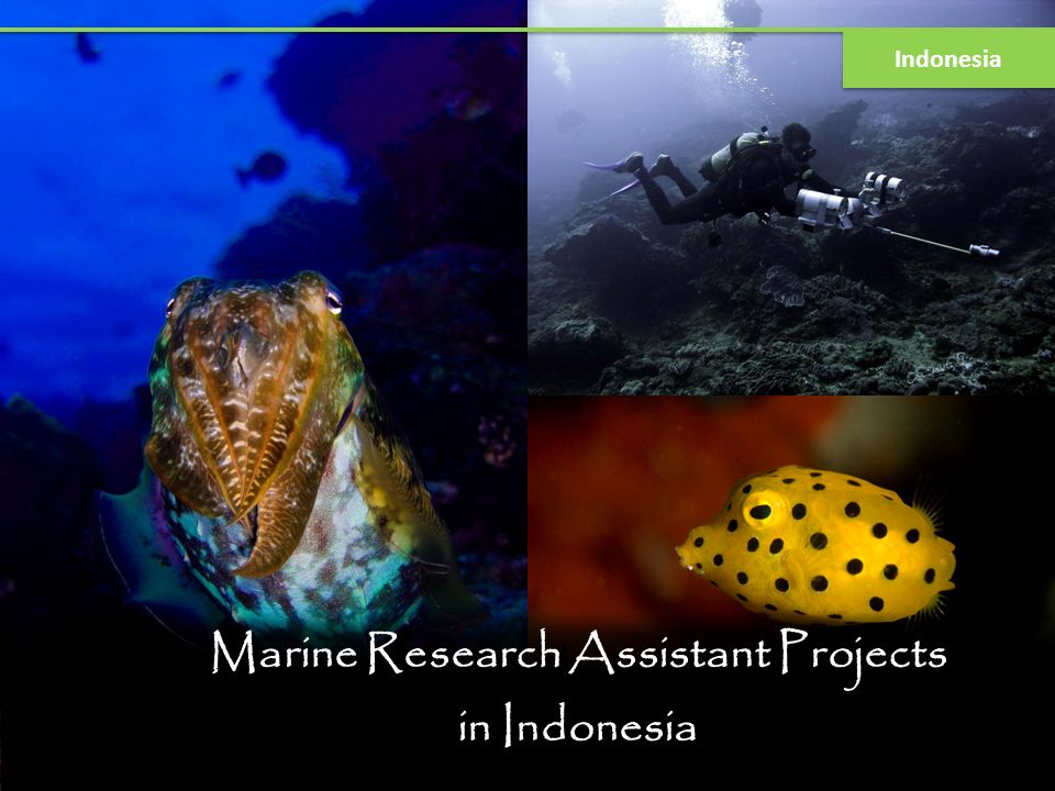 Marine Research Assistant Projects