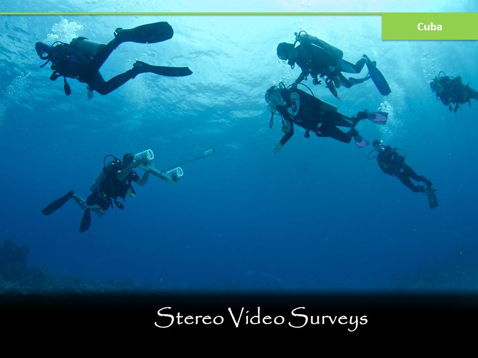 Stereo Video Surveys Cuba