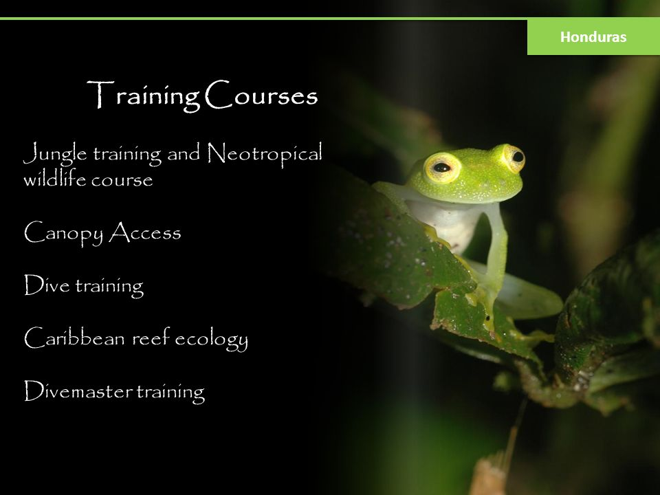 Training Courses Jungle training and Neotropical wildlife course