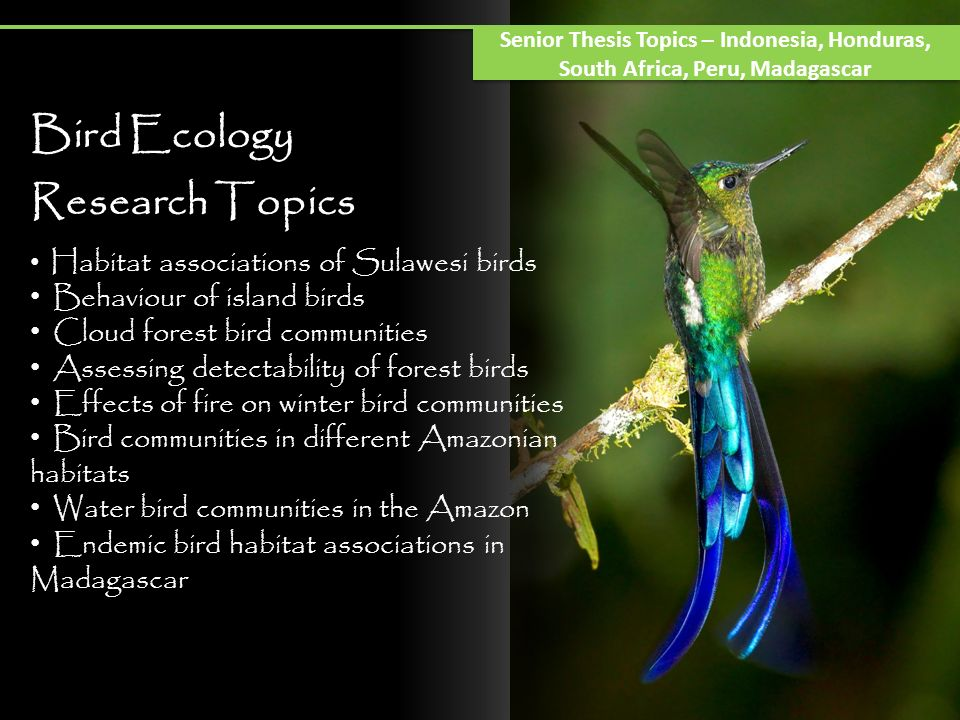 Bird Ecology Research Topics Behaviour of island birds