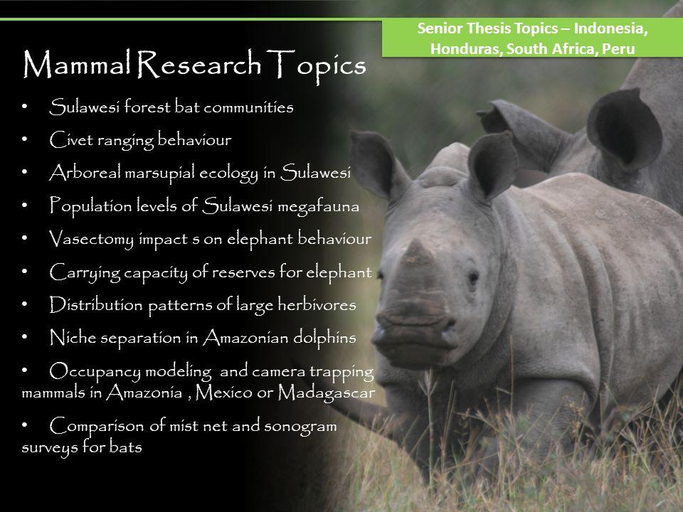 Senior Thesis Topics – Indonesia, Honduras, South Africa, Peru