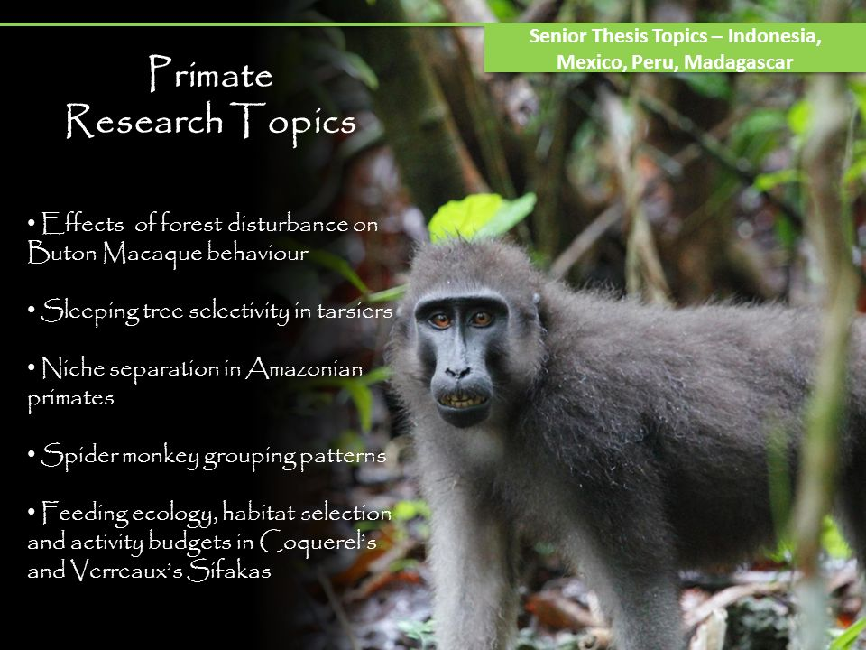 Primate Research Topics