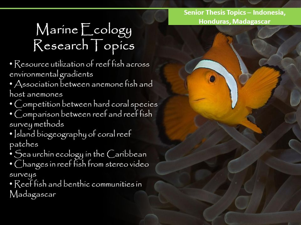 Marine Ecology Research Topics