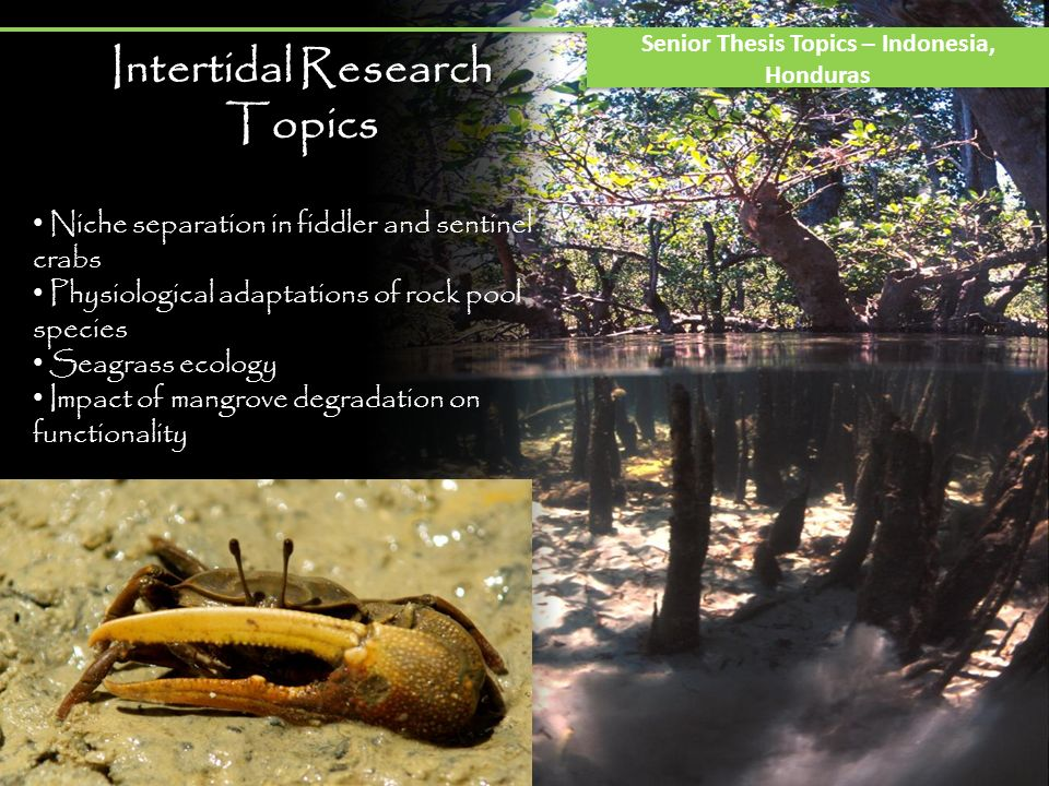 Intertidal Research Topics Senior Thesis Topics – Indonesia, Honduras