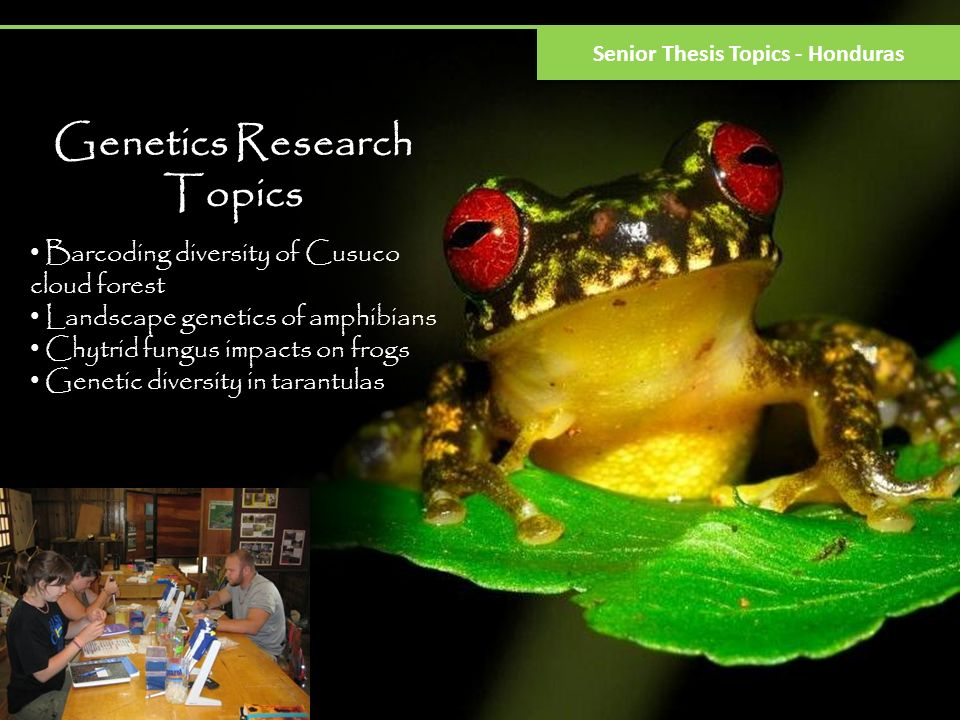 Genetics Research Topics Senior Thesis Topics - Honduras