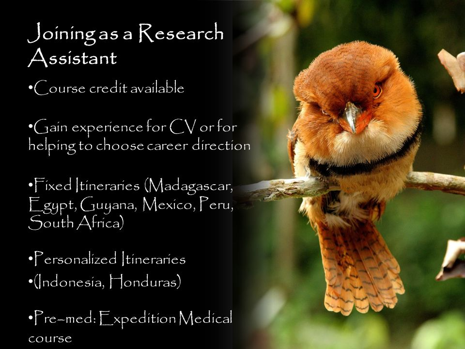 Joining as a Research Assistant