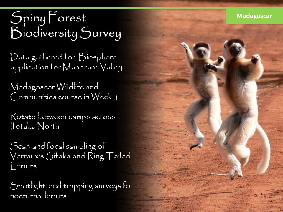 Spiny Forest Biodiversity Survey