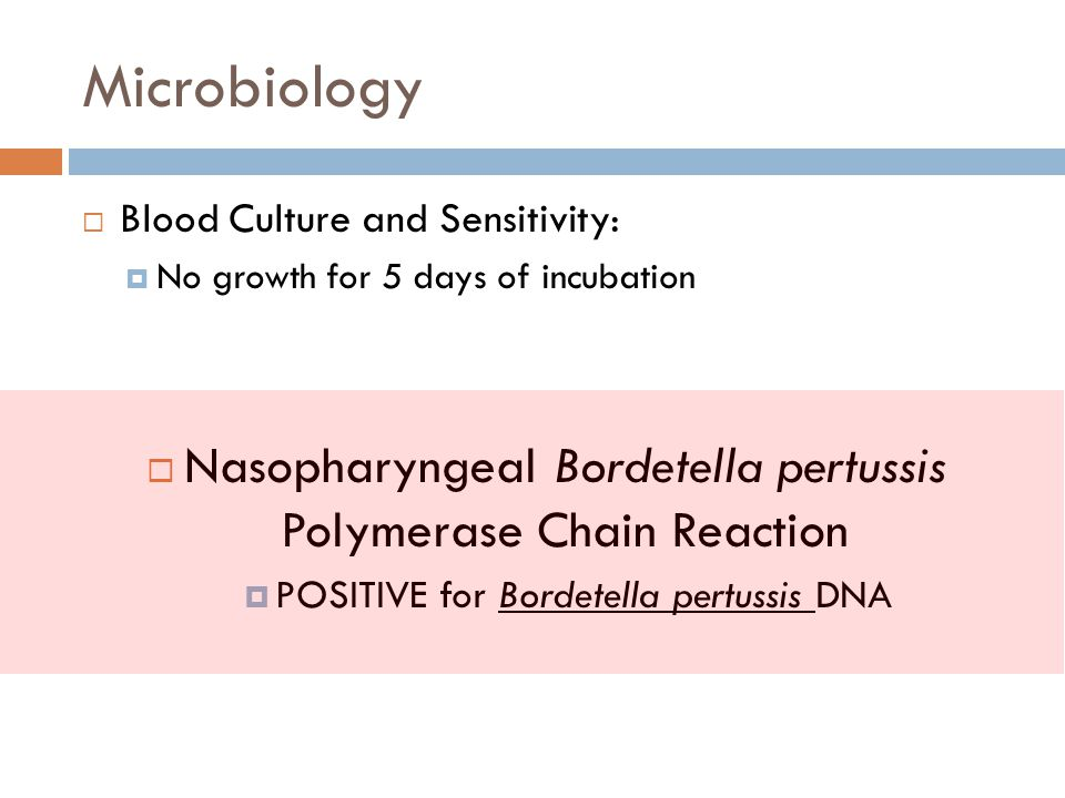 Microbiology Blood Culture and Sensitivity: No growth for 5 days of incubation. Nasopharyngeal Bordetella pertussis Polymerase Chain Reaction.