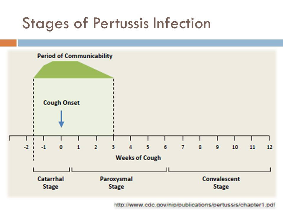 Stages of Pertussis Infection