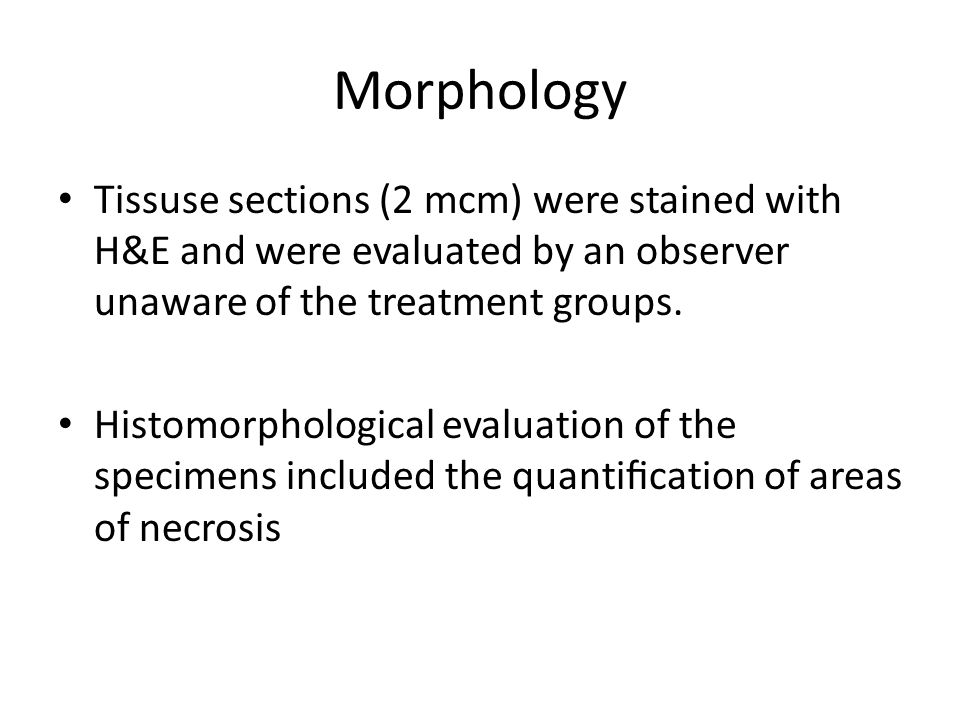 Morphology Tissuse sections (2 mcm) were stained with H&E and were evaluated by an observer unaware of the treatment groups.
