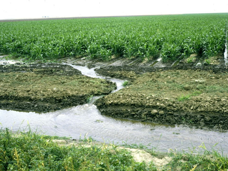 Runoff from furrows (tailwater) is one of the most significant inefficiencies in furrow irrigation.