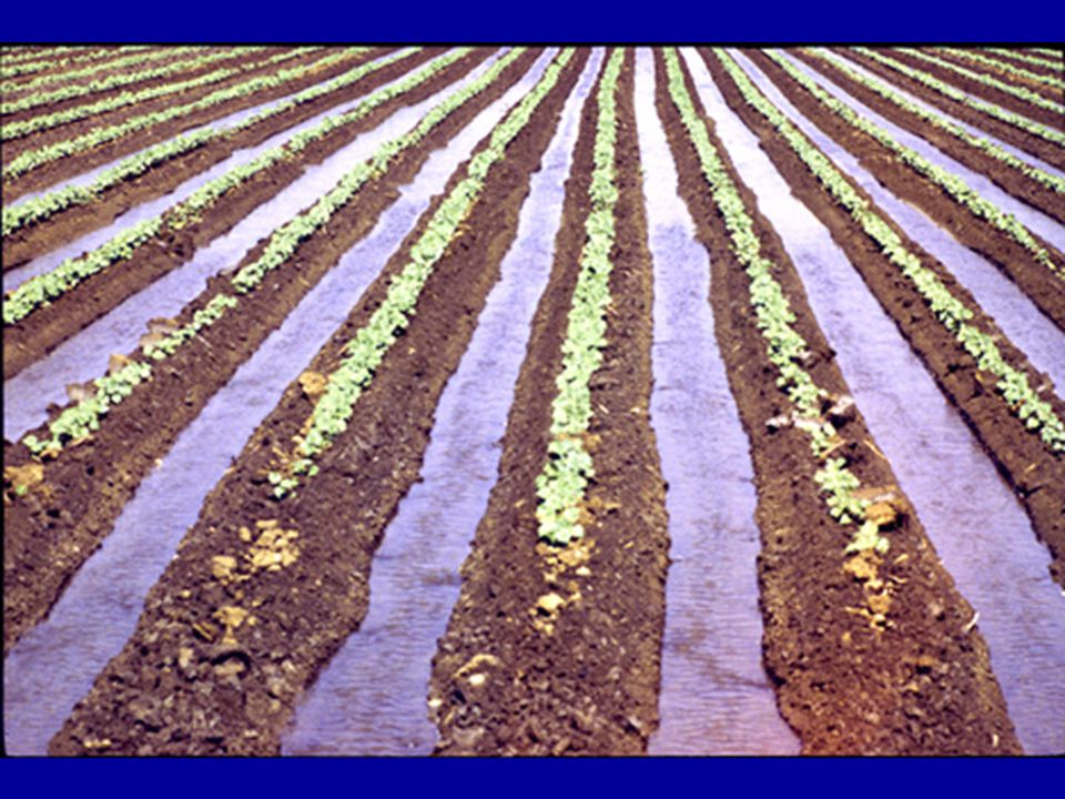 Graded furrow irrigation is the most common type of surface irrigation in Oklahoma.