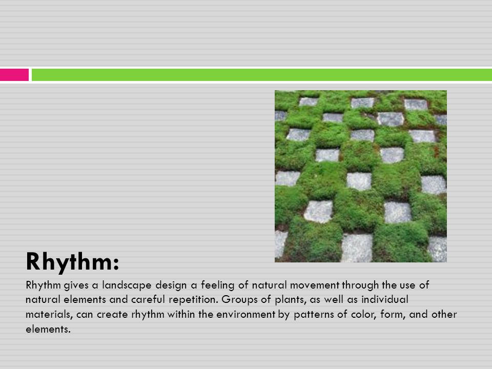 Rhythm: Rhythm gives a landscape design a feeling of natural movement through the use of natural elements and careful repetition.