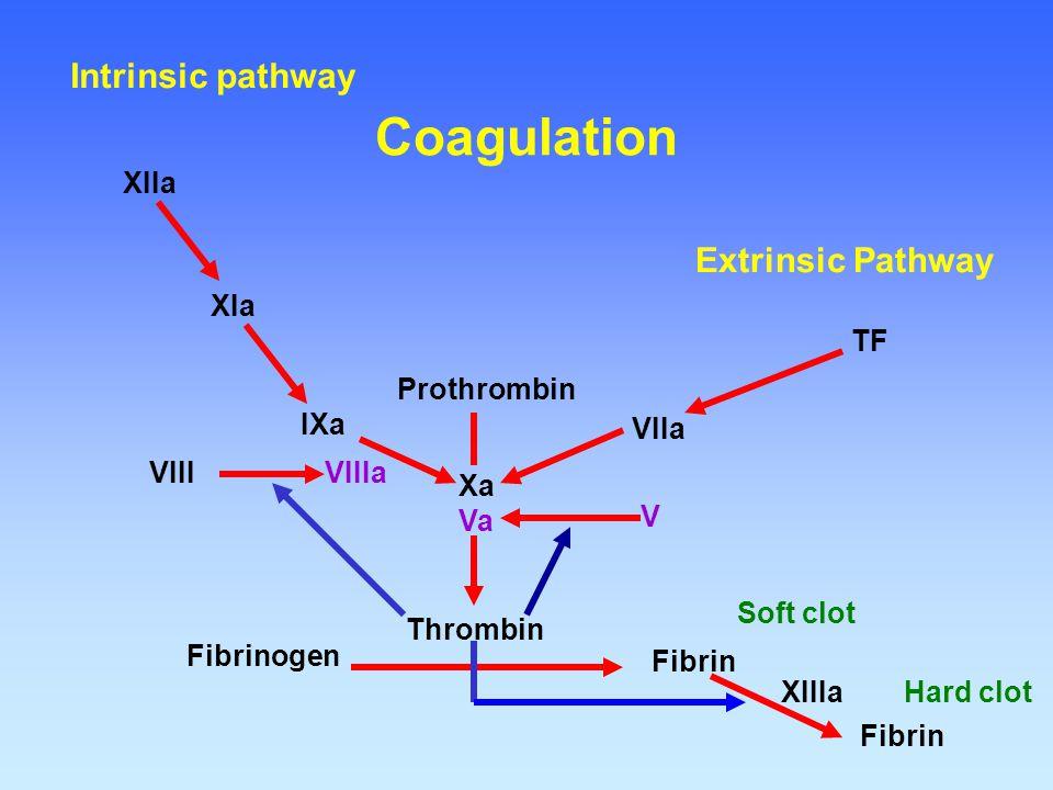 Coagulation Intrinsic pathway Extrinsic Pathway XIIa XIa TF