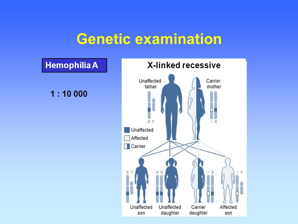 Genetic examination Hemophilia A X-linked recessive 1 : 10 000