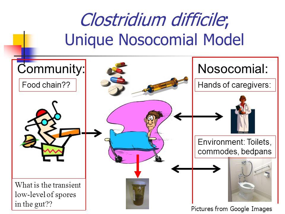 Clostridium difficile; Unique Nosocomial Model