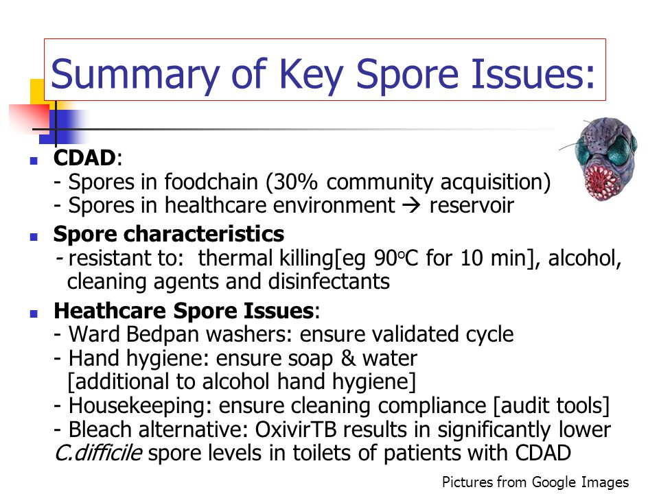 Summary of Key Spore Issues: