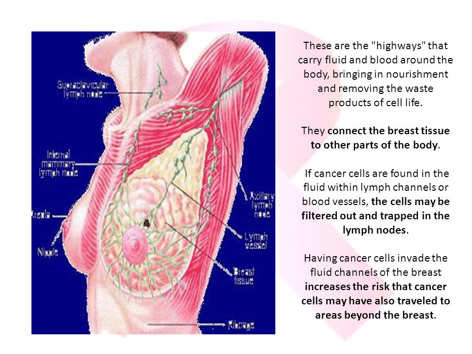 They connect the breast tissue to other parts of the body.