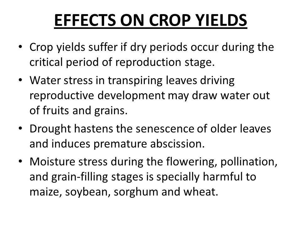 EFFECTS ON CROP YIELDS Crop yields suffer if dry periods occur during the critical period of reproduction stage.