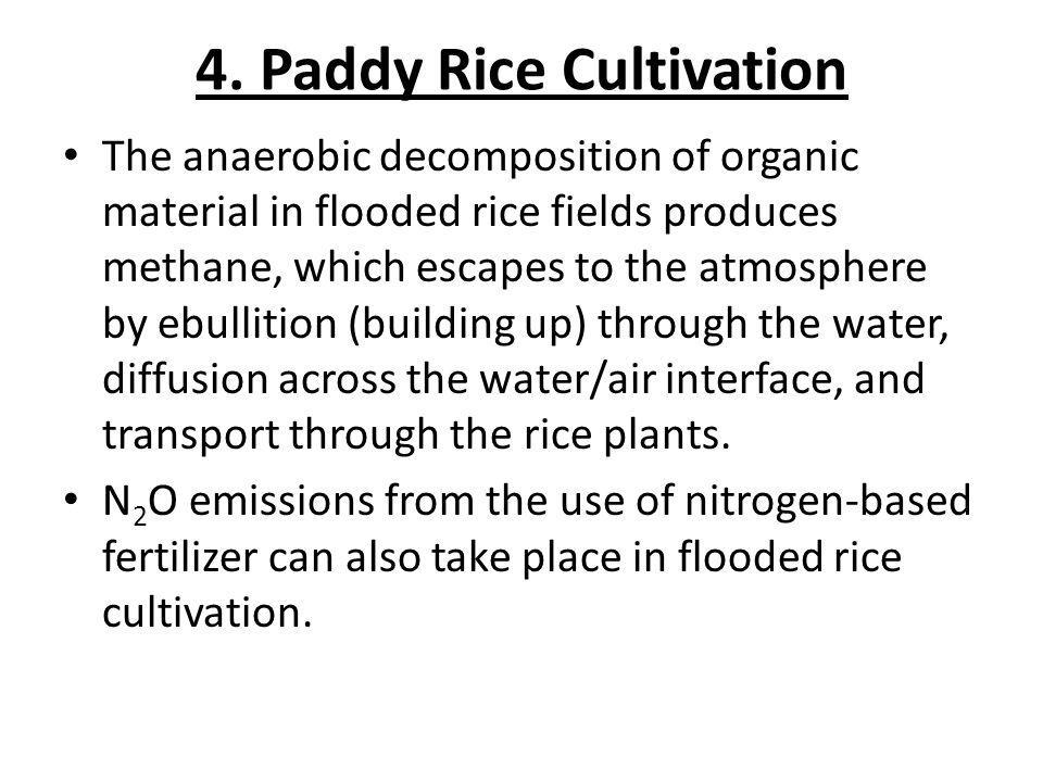 4. Paddy Rice Cultivation