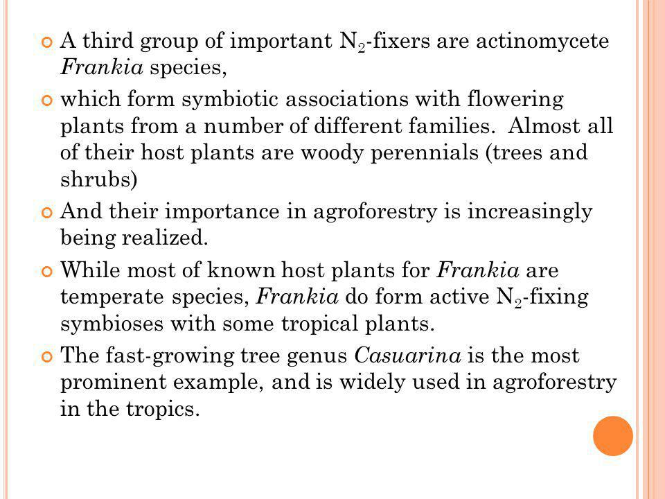 A third group of important N2-fixers are actinomycete Frankia species,