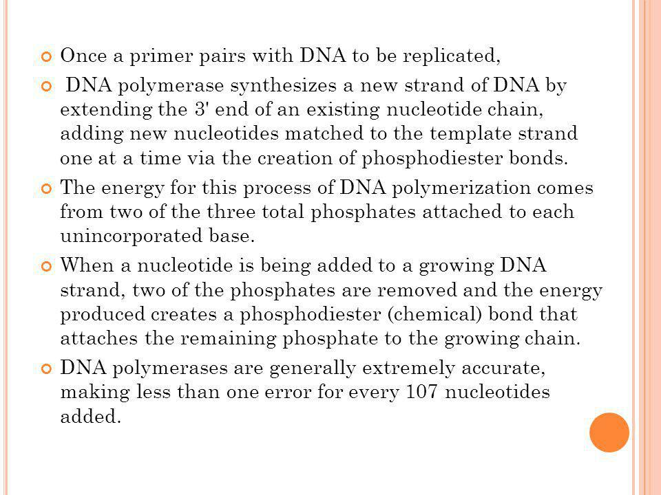 Once a primer pairs with DNA to be replicated,