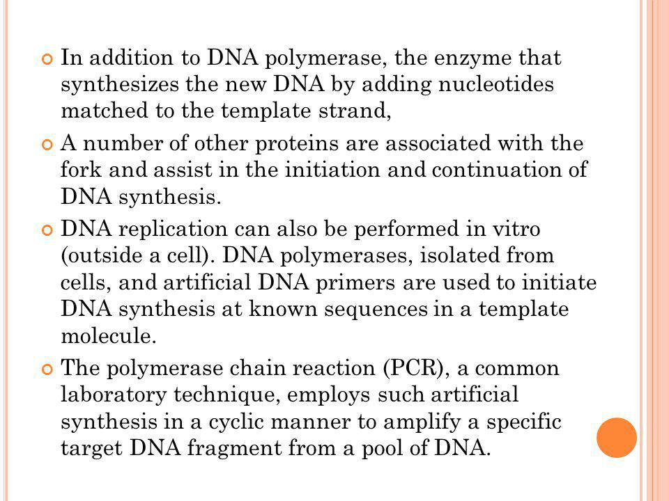 In addition to DNA polymerase, the enzyme that synthesizes the new DNA by adding nucleotides matched to the template strand,