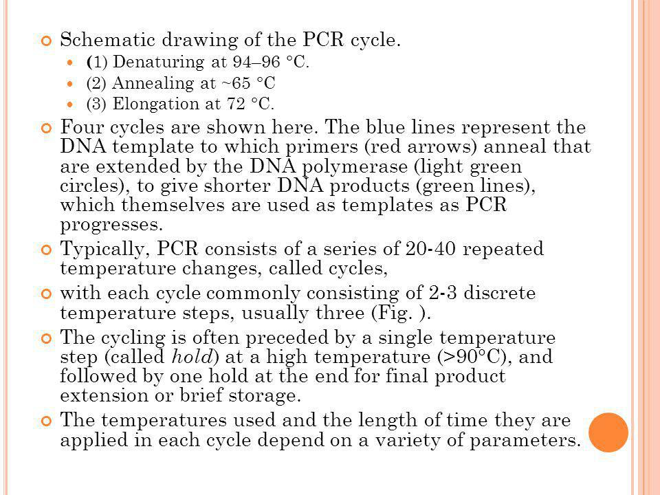 Schematic drawing of the PCR cycle.
