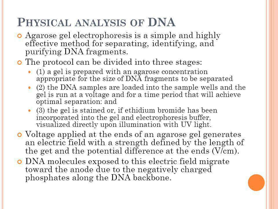 Physical analysis of DNA