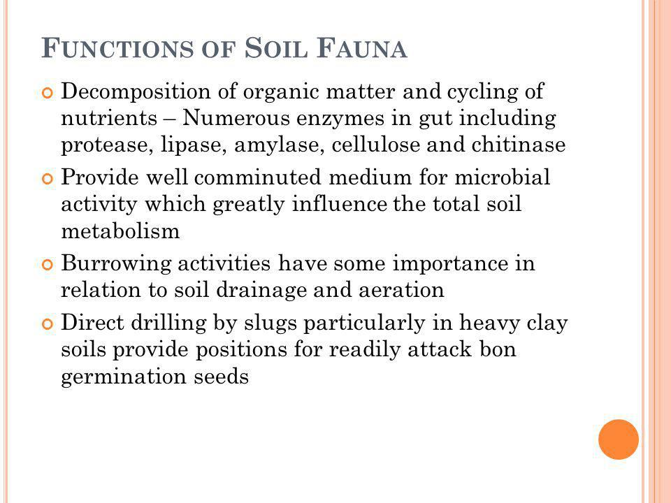 Functions of Soil Fauna