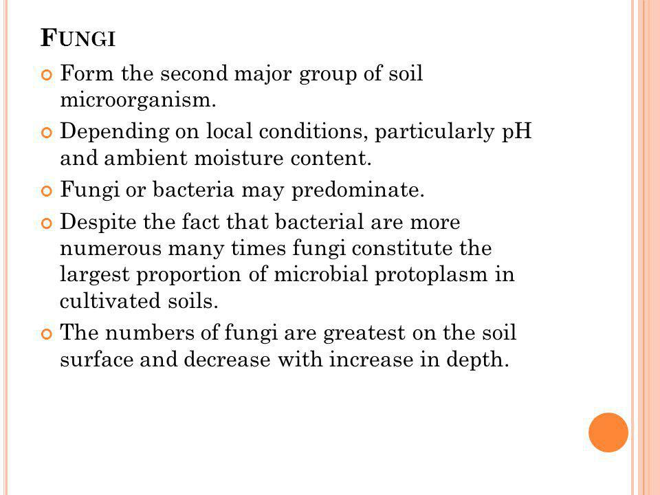 Fungi Form the second major group of soil microorganism.