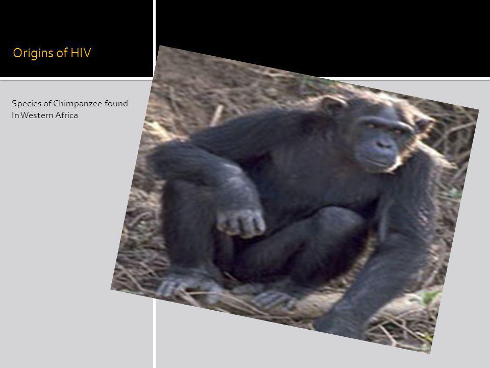 Origins of HIV Species of Chimpanzee found In Western Africa