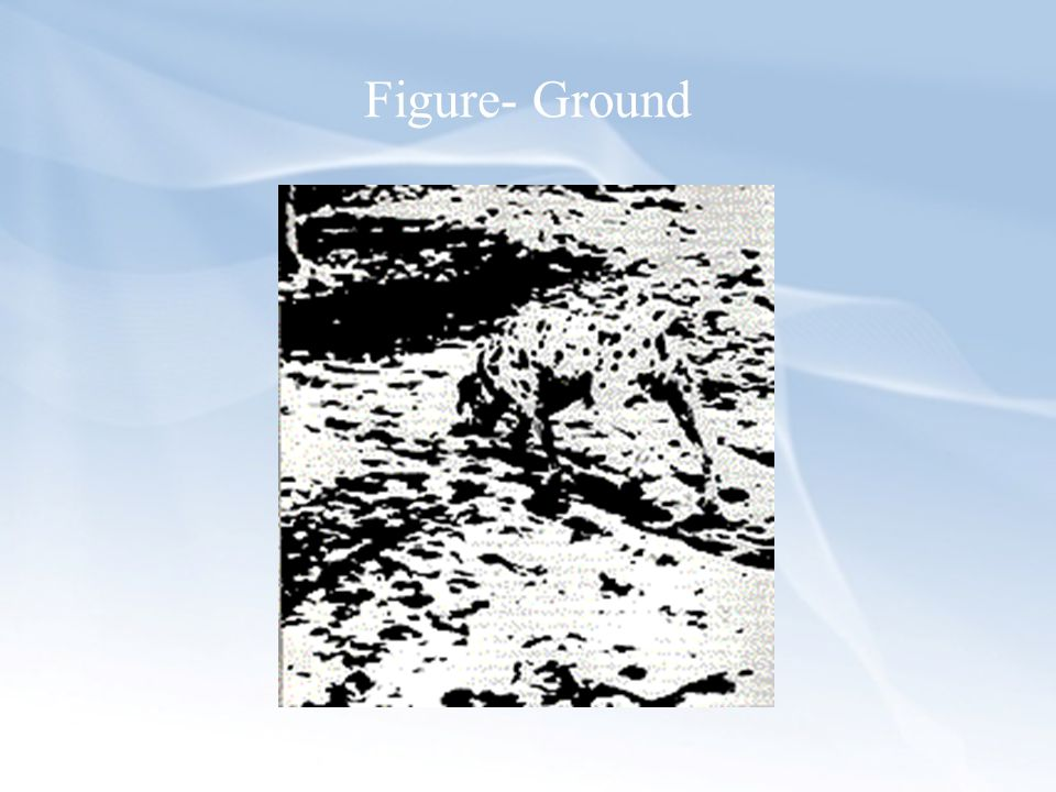 Figure- Ground