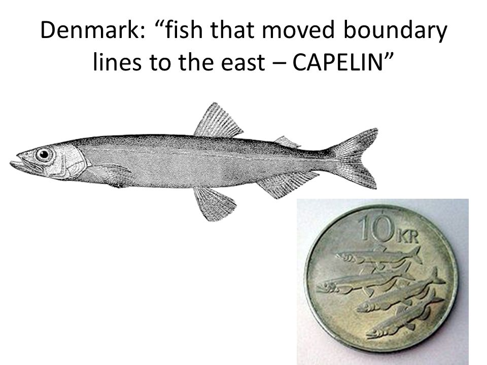 Denmark: fish that moved boundary lines to the east – CAPELIN