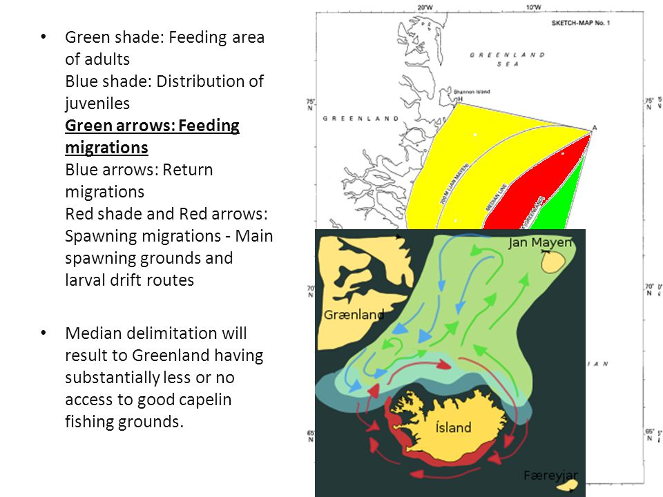 Green shade: Feeding area of adults Blue shade: Distribution of juveniles Green arrows: Feeding migrations Blue arrows: Return migrations Red shade and Red arrows: Spawning migrations - Main spawning grounds and larval drift routes