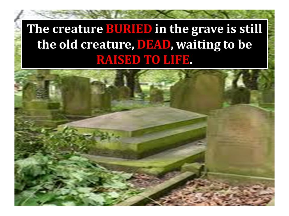 The creature BURIED in the grave is still the old creature, DEAD, waiting to be RAISED TO LIFE.