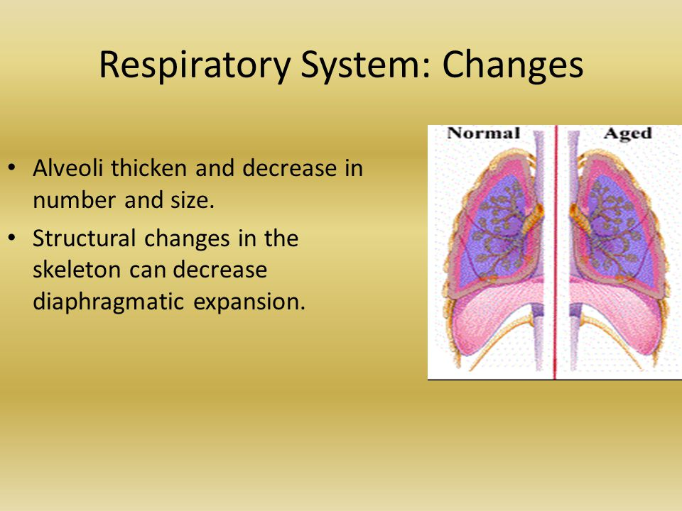 Respiratory System: Changes
